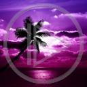 krajobraz palma niebo plenery widok przyroda natura zachód słońca widoki plener