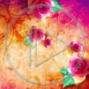 kwiat kwiaty róża roślina wzór rośliny róże