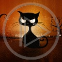 zwierzęta kot koty zwierze kocur czarny kot
