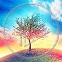 niebo drzewo roślina Ziemia rośliny przyroda natura drzewa