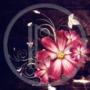 kwiat kwiaty roślina wzór rośliny wzory