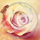 kwiat kwiaty kwiatek róża rośliny kwiatki róże