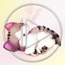 zwierzęta kot kotek koty kotki kociak zwierze