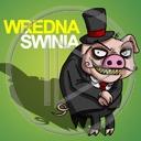 zwierzęta świnia prosiak prosiaki zwierze wredna świnia
