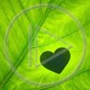 serce miłość zieleń serduszka liść liście miłosne serduszko serca