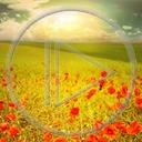 kwiat krajobraz kwiaty maki widok łąka przyroda natura plener czerwone maki