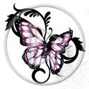zwierzęta motyl owady motylek motyle owad motylki