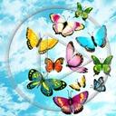 motyl owady motylek motyle owad motylki kolorowe