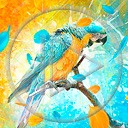 zwierzęta ptaki ptak papuga ara papugi zwierze