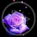 kwiat kwiaty róża roślina rośliny róże