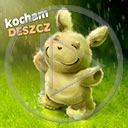 zwierzęta deszcz króliki kocham deszcz krolik pada deszcz