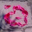 serce miłość róża płatki miłosne serca płatki róż