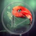 zwierzęta ryba rybki rybka fish akwariowa