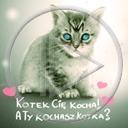 zwierzęta serce miłość kot kotek koty miłosne kociak serca zwierze kotek cię kocha a ty kochasz kotka?