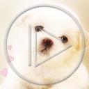zwierzęta pies serce miłość piesek psy szczeniak miłosne serca