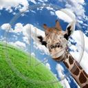 zwierzęta niebo Ziemia świat żyrafa żyrafy szyja zwierze