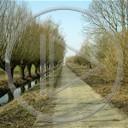 droga spacer słonecznie krajobrazy wierzby