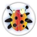 owady biedronka owad biedroneczka śmieszne biedronki