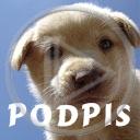zwierzęta pies piesek psy szczeniak pieski przytul zwierzę